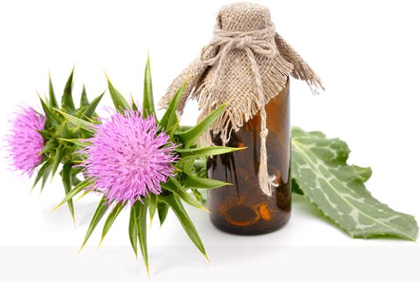 Масло расторопши используется для восстановления нормальной перистальтики кишечника и желудка