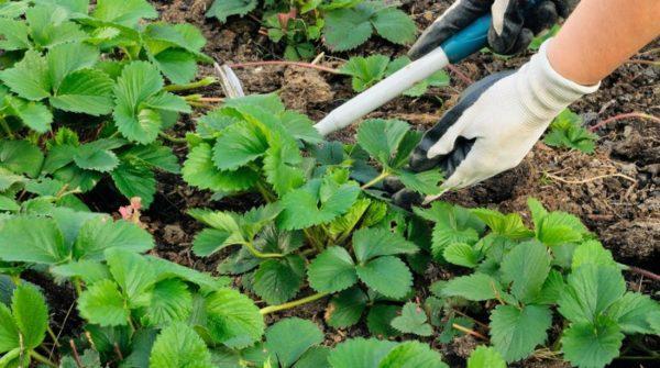 От огородных работ нужно отказаться