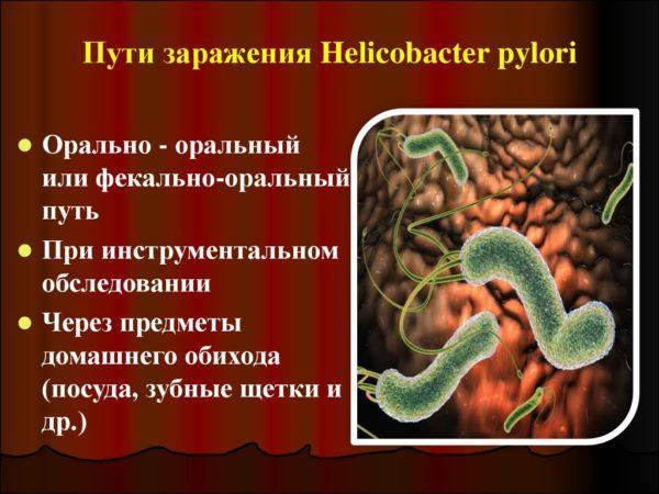 Пути заражения Helicobacter pylori