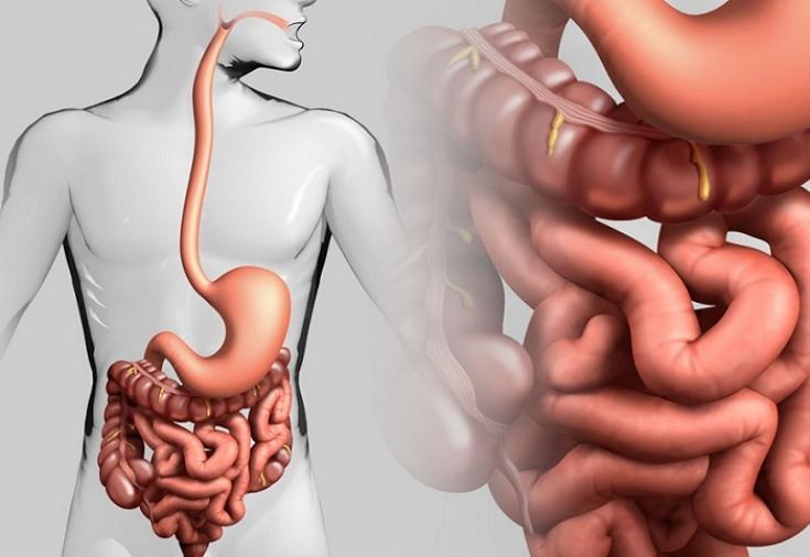 Лекарства для чистки кишечника от шлаков