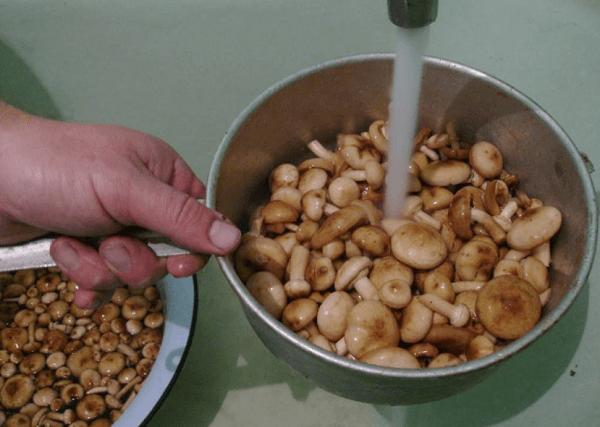 Тщательно осматривайте грибы перед приготовлением, чтобы в основной массе пригодных в пищу наименований не затерялось несколько ядовитых