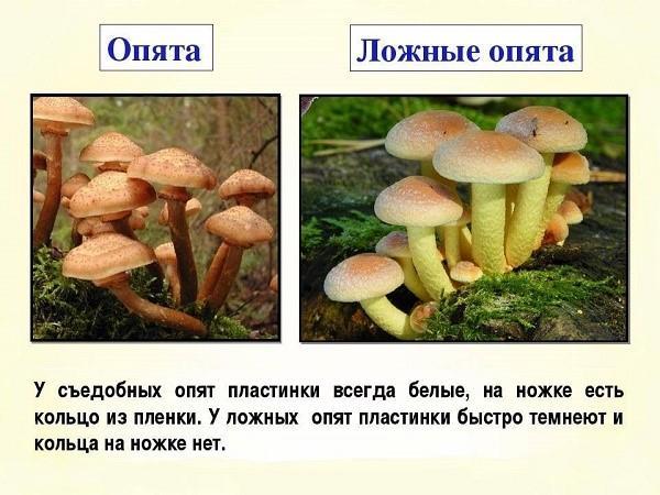 У каждой разновидности грибов существуют собственные особенности