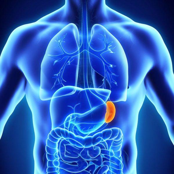 Селезенка — орган лимфатической системы, расположенный в зоне левого подреберья