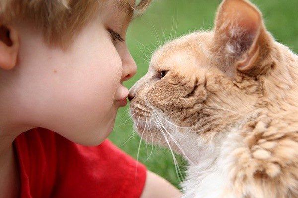 Не отказывайтесь от домашних любимцев из-за заражения глистами, лучше позаботьтесь и о их здоровье, купив аналогичного действия препарат в ветеринарной аптеке