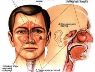 Нос (верхние дыхательные пути)