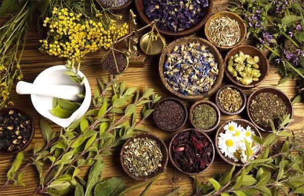 Разные травы - разное воздействие на кишечник