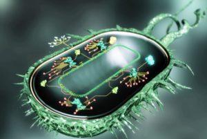 Бактериальный