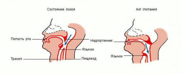 Акт глотания - элемент процедуры фиброгастроскопии