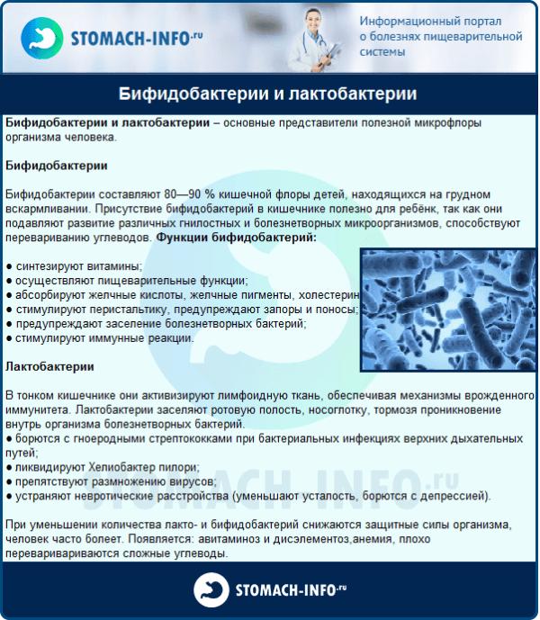 Бифидобактерии и лактобактерии