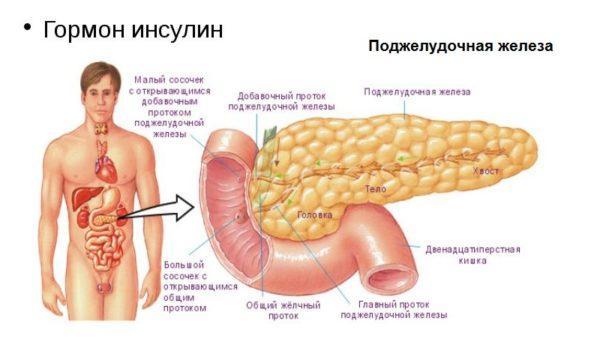 Гормон инсулин