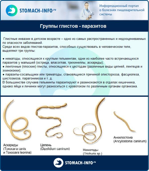 Группы глистов - паразитов