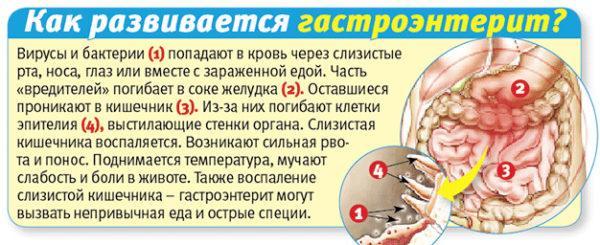 Механизм развития гастроэнтерита