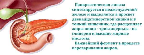 Панкреатическая липаза