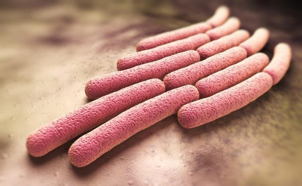Причиной энтероколита могут стать бактериальные и вирусные инфекции, в частности, шигеллез