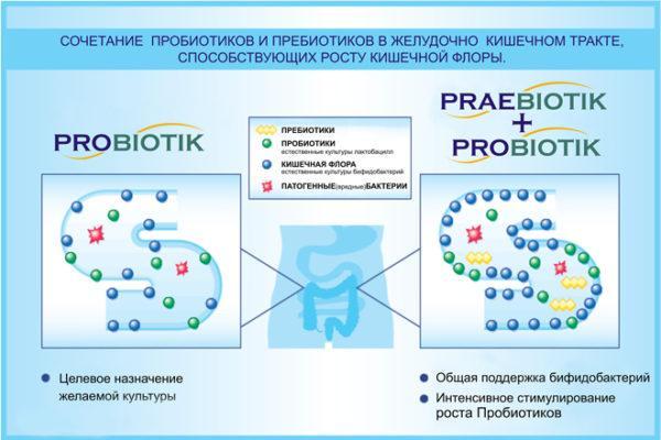 Пробиотик, пребиотик
