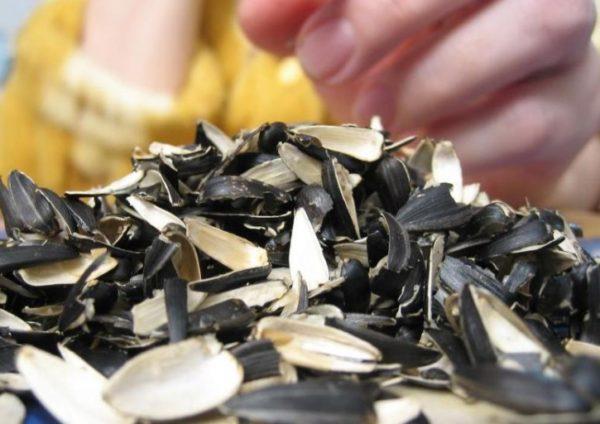 Шелуха от семечек может спровоцировать воспалительный процесс