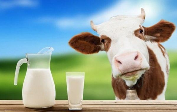 Цельное коровье молоко оказывает значительное влияние на механизм развития острого или хронического воспаления