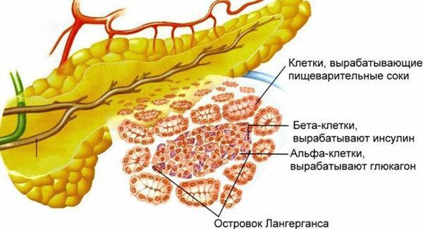 Ваготонин стабилизирует уровень сахара в крови