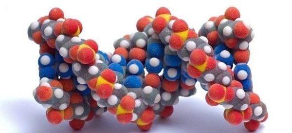Вазоинтенсивный пептид синтезируется разными органами
