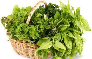 Зелень (преимущественно в свежем виде)