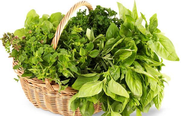 Зелень хорошо заменяет специи, которые запрещены для употребления онкобольными