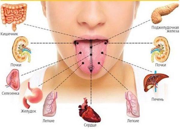 Язык - это своеобразная карта органов человека