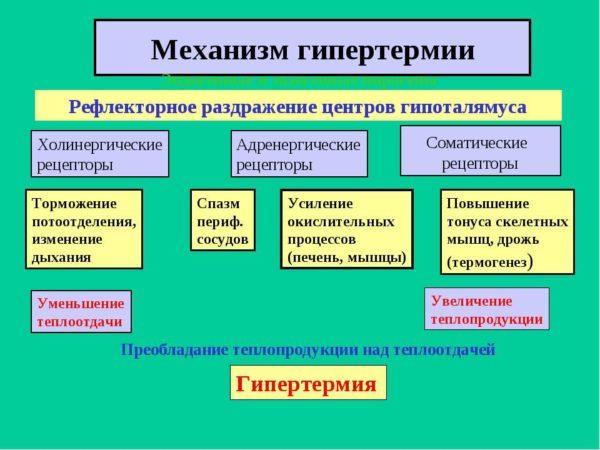 Механизм гипертермии