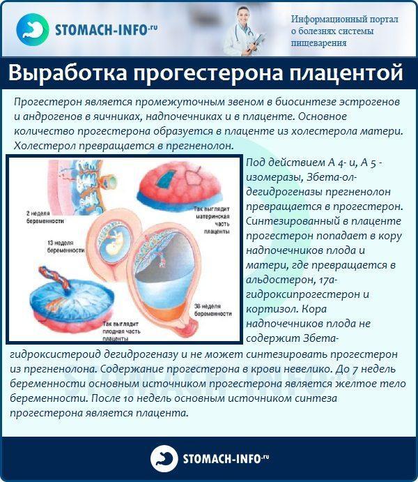 Где вырабатывается прогестерон