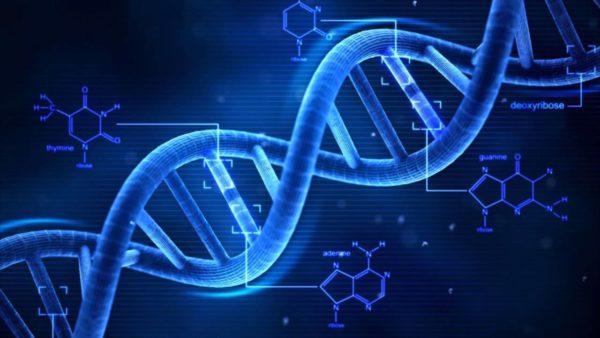 Провоцирующим фактором развития рака может являться генетическая предрасположенность