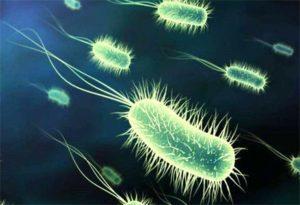Инфекционные заболевания кишечника