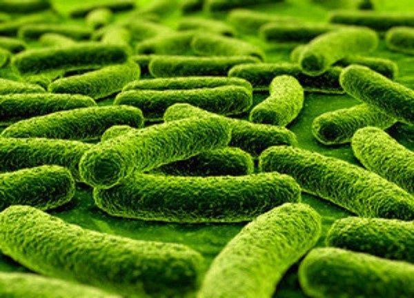 Бактериям, проживающим в кишечнике взрослого человека, не нужна сторонняя помощь, чтобы восстановиться
