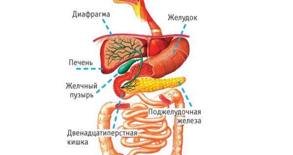 Чаще всего боли в правом боку вызываются заболеваниями внутренних органов, расположенных с этой стороны тела