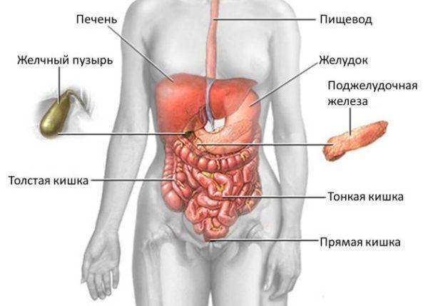 Диффузные изменения паренхимы печени и поджелудочной железы
