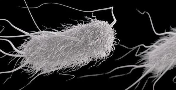 Грамотрицательные бактерии E. Coli