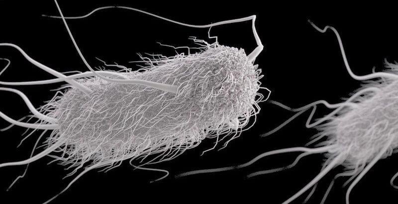 Escherichia coli гинекология симптомы