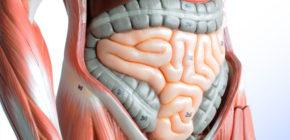 Как обследовать кишечник