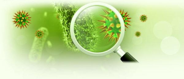 Каловые массы обследуются под микроскопом