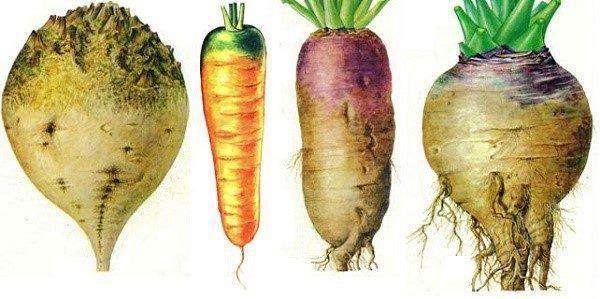 Корнеплоды и иные овощи также могут повлиять на появление кишечных газов