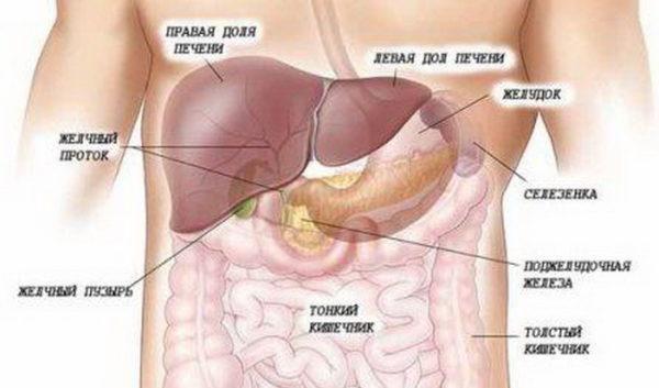Местонахождение желчного пузыря в организме человека