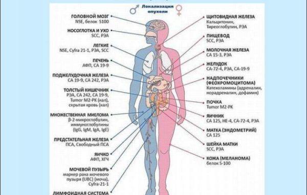 Онкомаркеры для определения заболевания