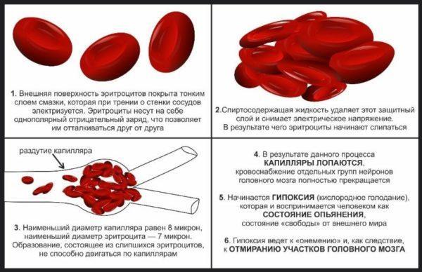 Опасность воздействия алкоголя на кровь