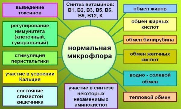 Основные функции кишечной микрофлоры