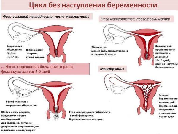 Болит живот слева от пупка у женщин