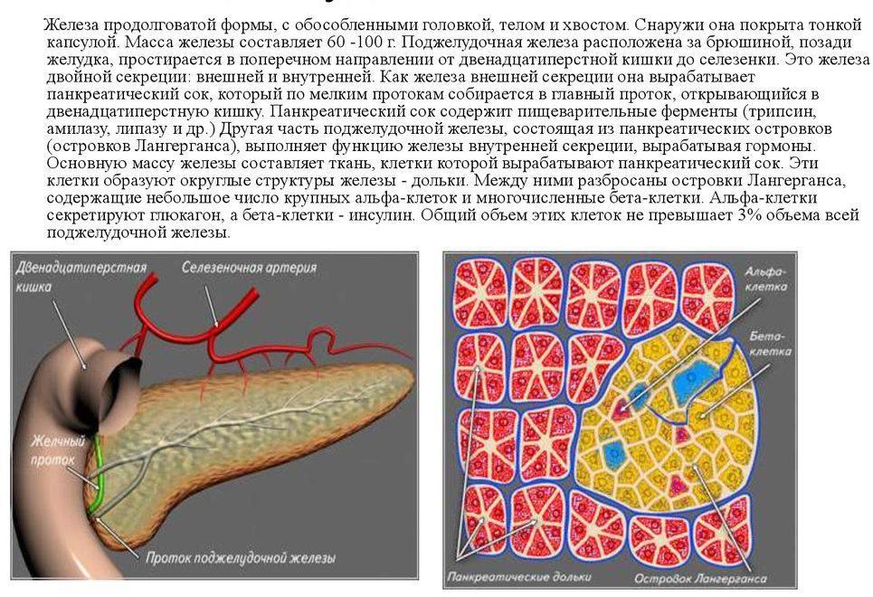 Пересадка бета клеток поджелудочной железы москва