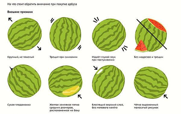Правила выбора спелого арбуза