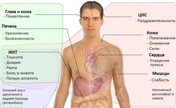 При наличии характерных симптомов у пациента врач сразу назначает обследование на гельминтоз