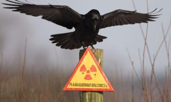 Радиоактивные объекты, расположенные возле мест проживания несут большую опасность