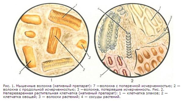 Виды мышечных волокон в кале