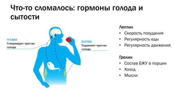 За контроль аппетита отвечают специальные гормоны