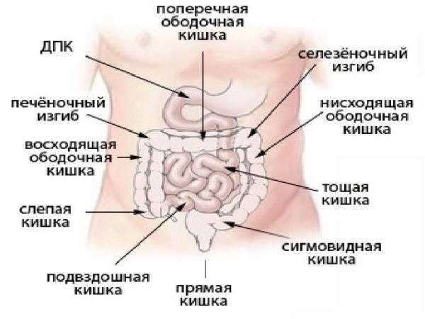 Расположение ободочной кишки